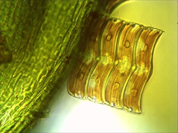 Bresser Mikroskop Science TRM-301 Trinokular 40x-1000x - 5