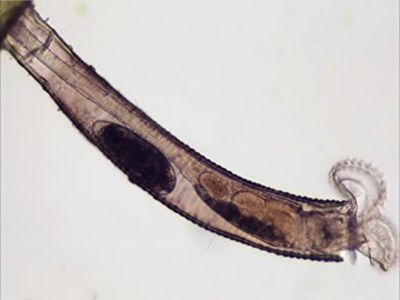 Bresser Mikroskop Science TRM-301 Trinokular 40x-1000x - 6