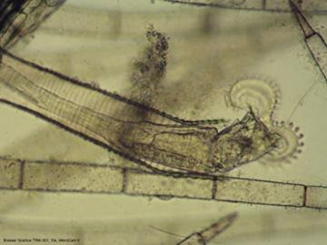 Bresser Mikroskop Science TRM-301 Trinokular 40x-1000x - 8