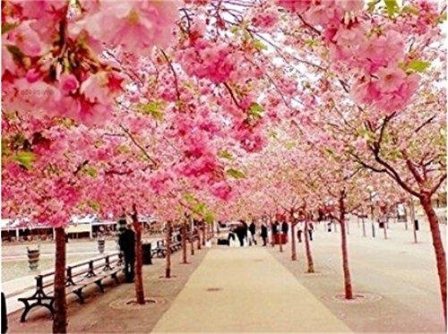 Malen Nach Zahlen Kirschblüten Am Uferweg 4050 Cm
